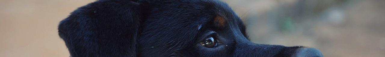 Hondenbeet letselschade